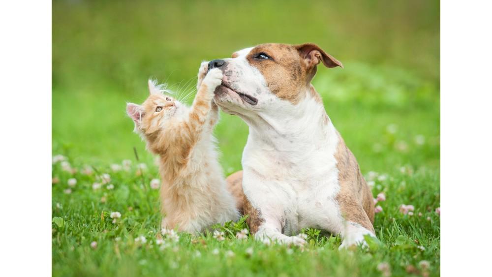 Lotta Contro I Parassiti Come Salvaguardare I Vostri Cani E Gatti
